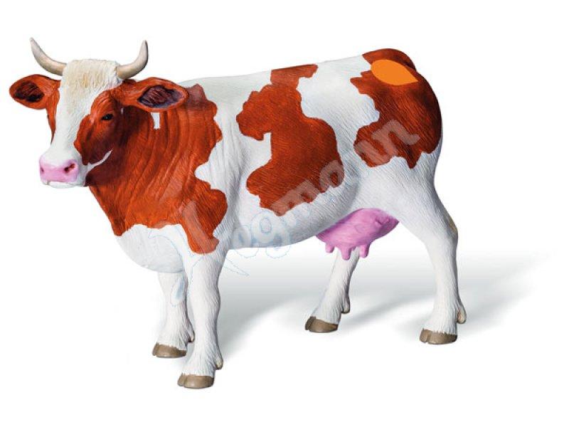 Erfreut Die Anatomie Einer Kuh Zeitgenössisch - Menschliche Anatomie ...